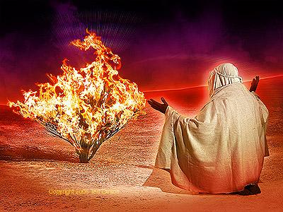 The Burning Bush!