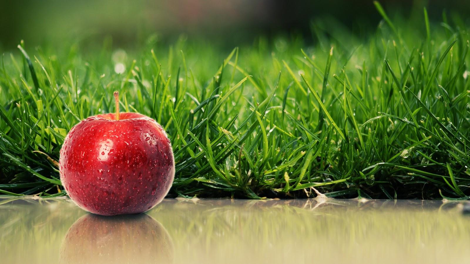 real apple red nature hd wallpaper jpg